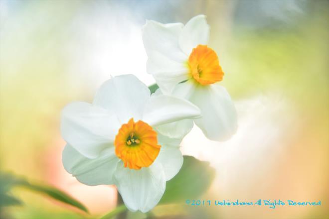 春の光に囲まれ