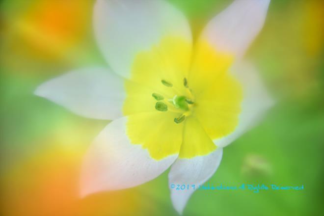 春光の中で見る夢