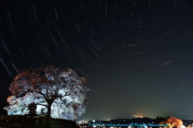 夜桜と星の軌跡