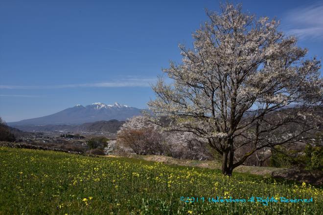 八ケ岳と桜