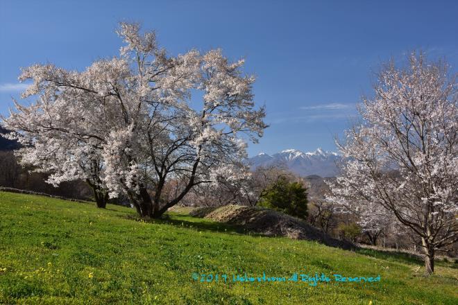 桜越の八ヶ岳