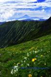 お花畑と富士山 @YKH_7724.jpg