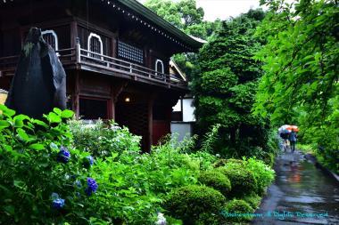 雨の修廣寺