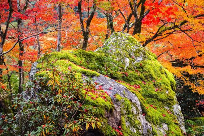 11獅子岩.jpg