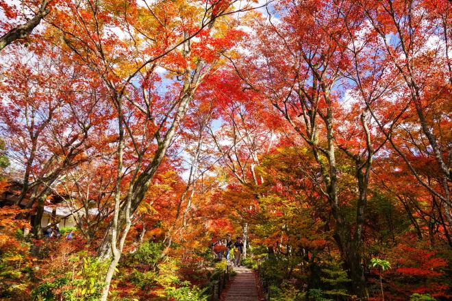 07秋彩の森.jpg