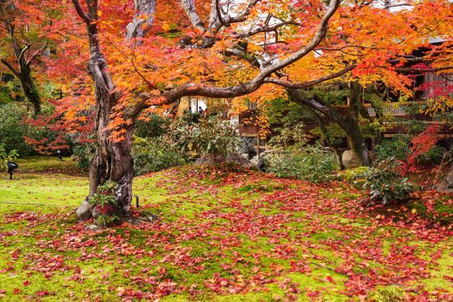10苔の庭.jpg