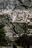 2019-4-1春の花々_06.JPG