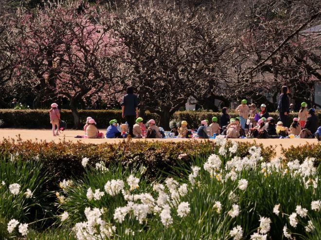 初春の陽ざしの中で P1142717.jpg