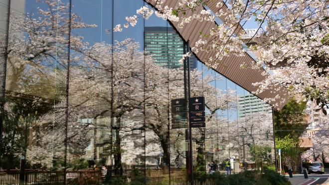 ウインドーの花見 P1156175.jpg