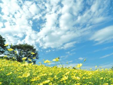 秋の空 P9243725.jpg
