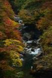 金蔵落しの渓流