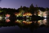 日本庭園のライトアップ